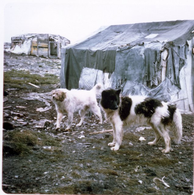 Photo Dogs and shacks Clyde couleur